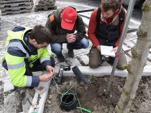 Trois ouvriers placent une sonde sous un arbre