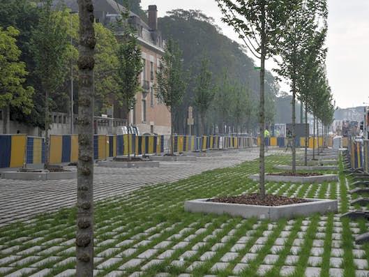 Jeunes arbres plantés le long d'une voirie